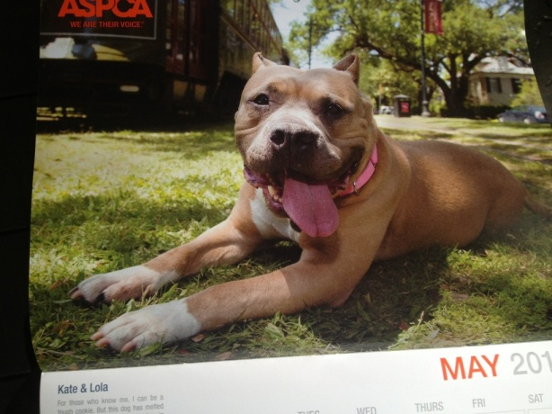 Lola Bird in the ASPCA 2013 Calendar