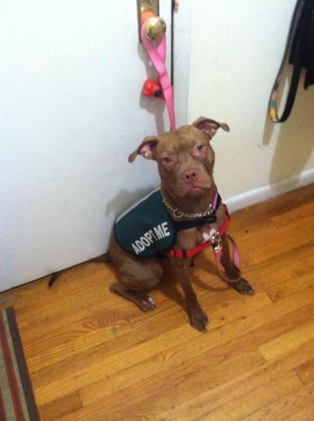 Baci modeling Adopt Me Jacket