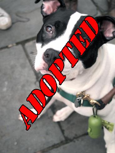 Frankie Adopted
