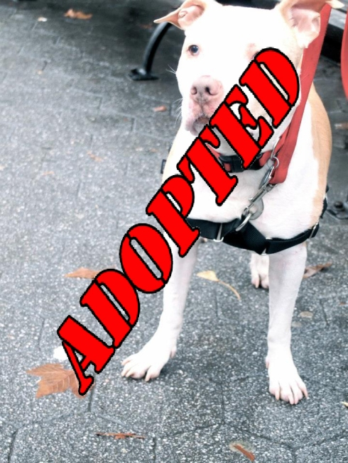 John Adopted