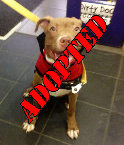 archer adopted