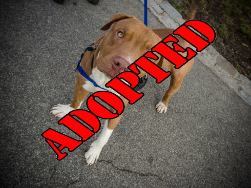 Tristan Adopted