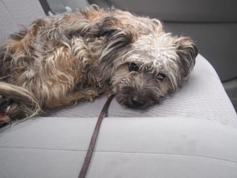 Nameless in the car