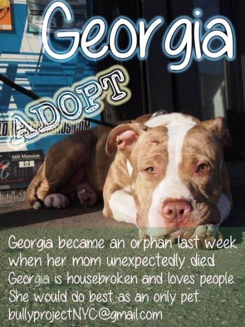 georgia needs home