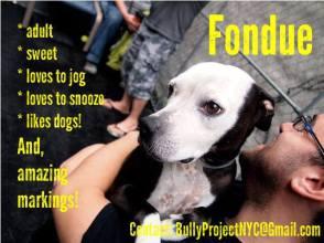 adopt fondue